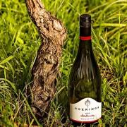 Chardonnay - Thumb Small