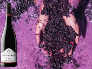 Summit Pinot Noir 2017 – new release