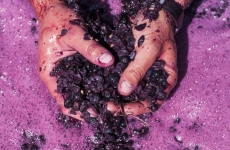 Tasting Australia – EAST END CELLARS MASTERCLASS: FUTURE FARMERS – BIODYNAMIC WINEGROWING