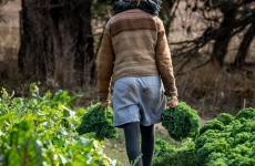 Market Gardener Opportunity